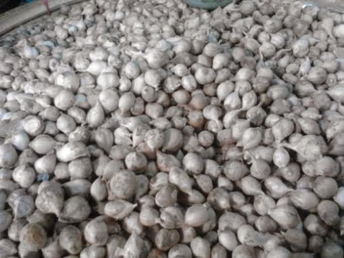 cara membuat jamu kuat dan tahan lama dari bawang putih